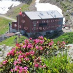 Alpenroseblüte bei der Wormser Hütte